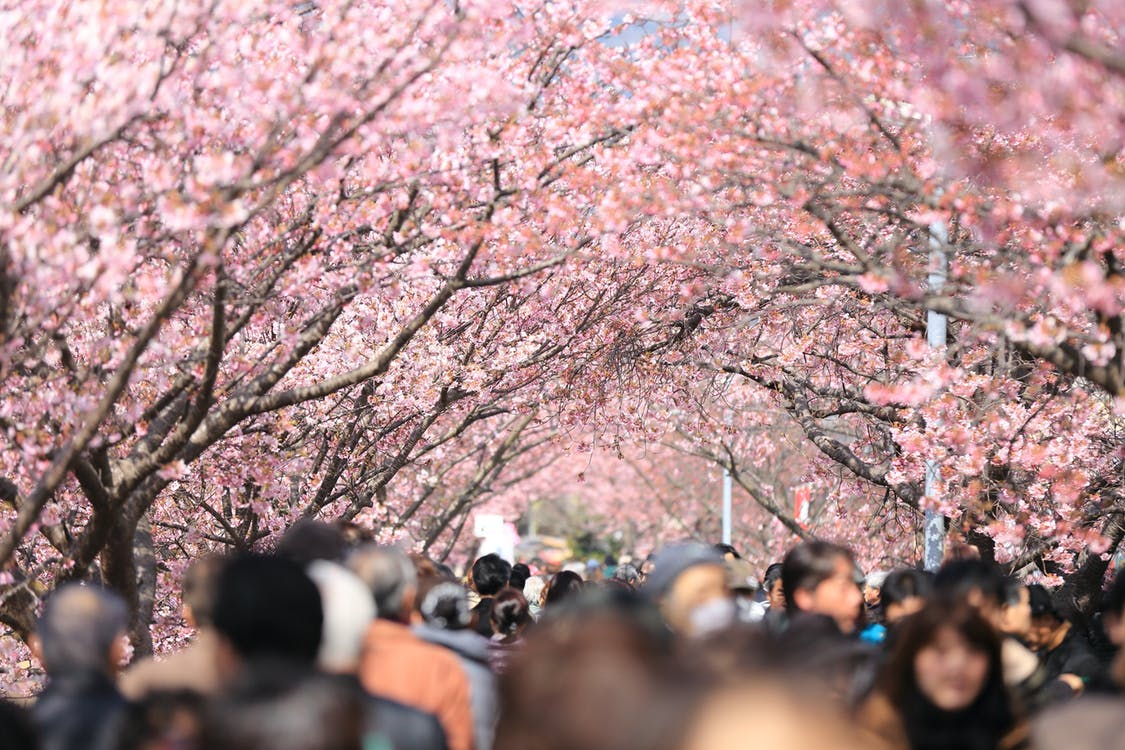 Sponsored Video: Experience the famous cherry blossom (hanami) in Tokyo